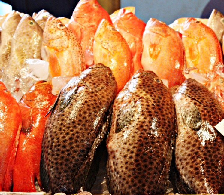 Fresh frozen, Buy from Chang Premium Seafood Inc