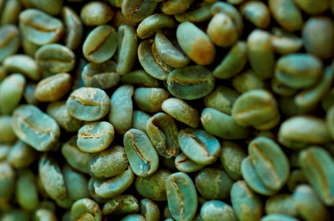 Green Coffee Beans Buy From N R Exports India Tamil Nadu