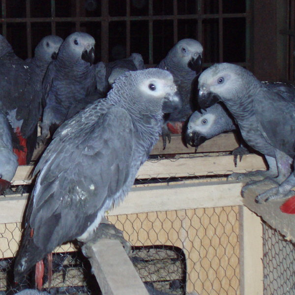 Live Birds And Retiles For Sale, Buy from Aruwan Suwannasin