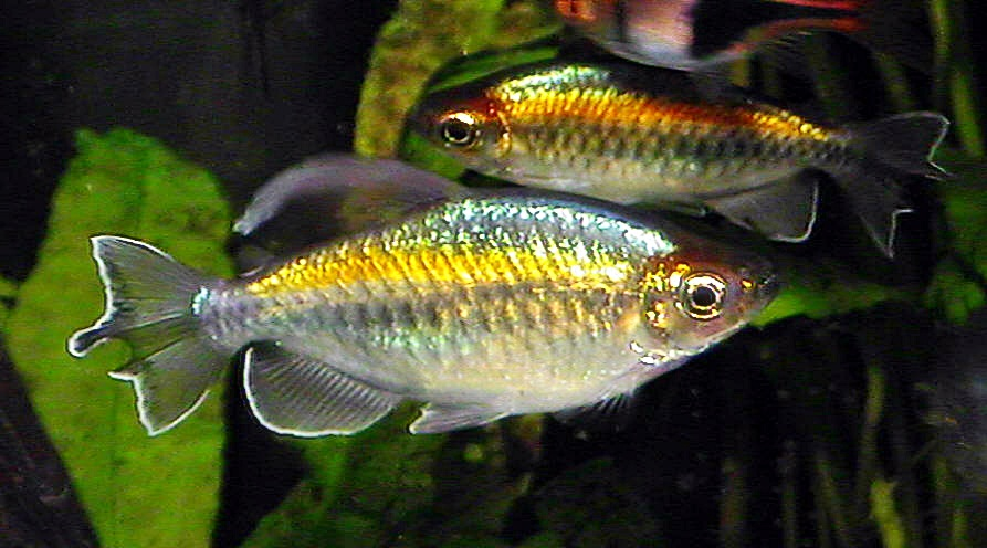 Live tropical fish wholesale, Buy from Ofish Store
