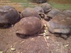 Aldabra tortoise, radiated tortoises and reptiles from Madagascar