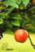 Fresh & Dry fruit