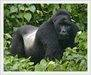Rwanda Gorillas Express Tour