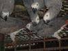 Live Birds, African Grey parrots, Macaw parrots, Cockatoos, Finches