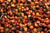 Sun Flower Oil, Corn Oil, Corn, Beans, Soyabeans, Casweh Nut, Peanut