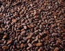 Dry cocoa beans