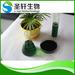 Natural green food colorant sodium copper chorophyll