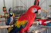 Exotic Parrots and Fertile Parrots Eggs for sale.