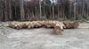 Logs for Sale- Greenheart, Wamara, Tatabu, Darina, Mora, Kabukalli