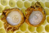 Royal Jelly From Vietnam
