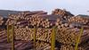 Wood logs and timber from Ukraine