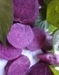 Food colorant--purple sweet potato color