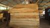 Teak plantation logs