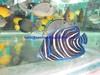 We looking for aquarium tropical fish & corals importer!