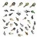 Brake chamber/slack adjuster/valve/brake system products