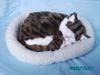 Breathing cat, breathing pets, simulation animal toy