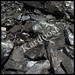 Gilsonite, Chrome ore, Bentonite, locorice