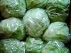 Iceberg Green Lettuce