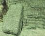 Alfalfa Hay in Big Bales For Animal Feeding For Sale
