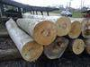 Oak/beech/ash/pine/spruce logs, timber, lumber, boards