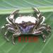 B109BW Bio-jewelry brooch, Blockbuster