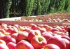 Fresh apple fruit and cavendish banana