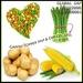 VEGETABLE FRUIT, Sweet Corn, GINGER, ASPARAGUS, APPLE, LEMON, GARLIC