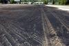 Biochar for soil improvement