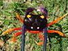 Halloween Crab, Tri-Color Moon Crab, Giant Land Crab, Giant Hermit Cra