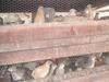 Quail eggs and birds