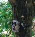Camouflage trail camera mms gsm surveillance camera