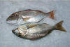 Sps fish