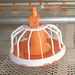 Full set automatic poultry farming equipment for chicken