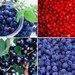 Plant extract, sport nutrition, natural food color, berries