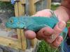 Reptiles-Live-Farm Bred