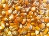 Maize (Corn) Yellow & White