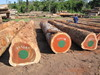 Sawn timber and wood logs