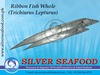 Conger Eel / Ribbon Fish