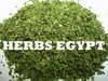 Sell Caraway, fennel, fenugreek, aniseeds