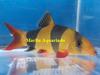 Life Tropical Fish