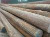 Greenheart Pilings & Lumber