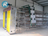 Egg chicken battery cage with auto egg collection equipment