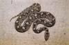 Wholesaler reptile & Mammals