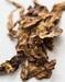 FCV virginia & BurleyTobacco Leaf