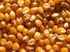 Corn_Yellow Corn_Corn