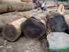 African round logs and timber