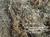 SARGASSUM SEAWEED, BROWN seaweed SARGASSUM SEAWEED, BROWN seaweed