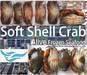Soft shell crab (Alive frozen seafood) Yangon, Myanmar