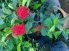 Fresh Flowers, seeds, plants, christmas trees, Verimicompost, Cocopeat