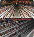 Automatic chicken layer cages galvanized poultry battery cage